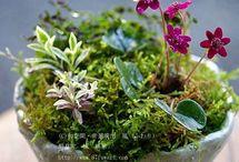 Kusamono - Bonsai accent plantings