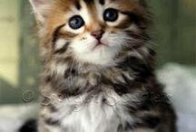 Cute Squishy Pets