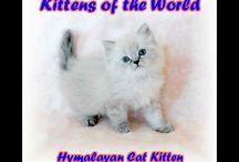 Kittens of the World
