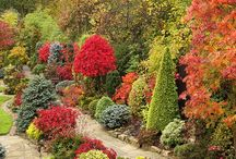 Favorite Conifer Gardens / Please share photos of your favorite conifer gardens! We all love some inspiration to get us outside and gardening.