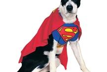 SuperHero Dog Costumes / by FancydressDog .com