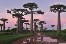 No comment / Les richesses de Madagascar en image