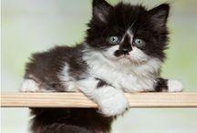 Kitty...Cats / by Cathy Hazel