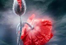 NUESTRO JARDIN /  Floreciendo las ideas :)
