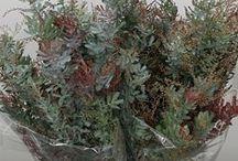 Greenery (Foliage)