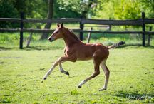 Foals 2015