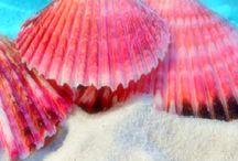 Kagylók / Imádom a tengert, a vizi élőlényket, szerintem a képek magukért beszélnek... Gyönyörű!