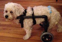 DIY doggy wheelchair