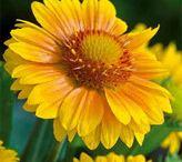 Flower Garden - CT zone 6