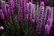 정원에 적용할 꽃