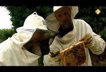 Klas: bijenproject