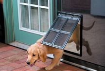 Dog Products I Need