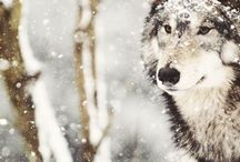 Wolves / by Sarissa W