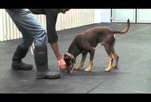 Dogs - Training