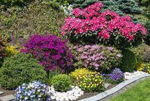 Plantas exteriores