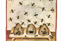 Bees / by Deborah Murphy