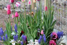 Bahçe çiçek