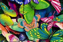 Kelebek ve Güzellik