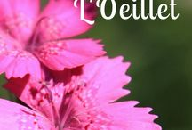 Fleurs & Jardin