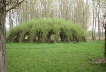 willow archtecture