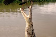 Amazing dyr/natur