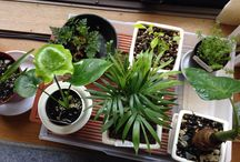 plants / my plants