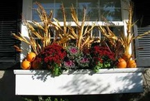 Fall Gardening / by Christina Maguadog