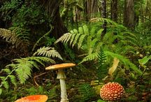 fairyland and magic / by Terry Morelock