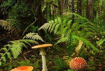 sienet/ mushroom