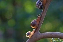 Lumache - Snails
