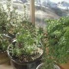 Gardening indoors and outdoors