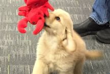 #Puppies and #lobster