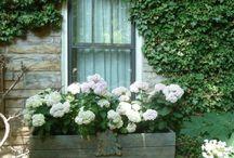 Window Box / by Bonita Cothren
