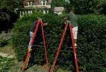 Inspiring Pruning Landscape Plants