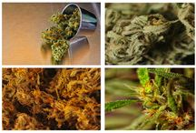 What is Marijuana / Marijuana is a drug made up of the flowers and leaves from plants in the genus, Cannabis.