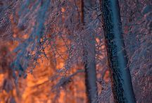 Winter ❄️⛄️ / winter
