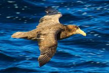 Sea birds Altona