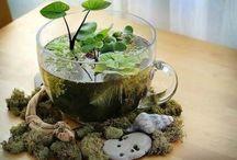 terrariums, succulents, cacti