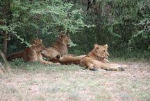 Wildlife / Wildlife in Africa