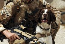 Bomb maker dogs and soldiers
