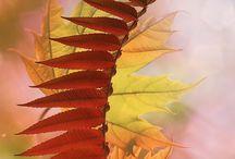 Осень фотографии