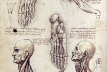 anatomia di leonardo