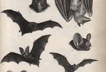Batty / by Wrex Havoc