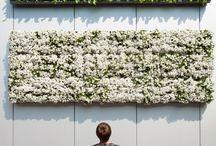 Giardini verticali e davanzali