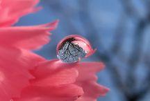 Photograhpy - Nature / by Darlene Chidgey