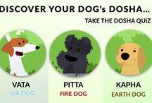 Ayurveda for dogs / Discover, Understand and Balance the elements that define your pet's mind, body and spirit.