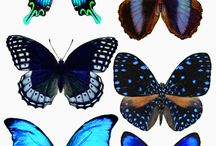 MARIPOSAS BATERFLAY