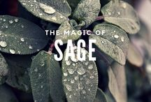 The Wisdom Herb: Sage Magical Properties and Uses