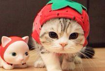 Cute Animals ❤