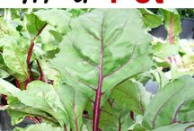 Growing vegetables in pots beetroot